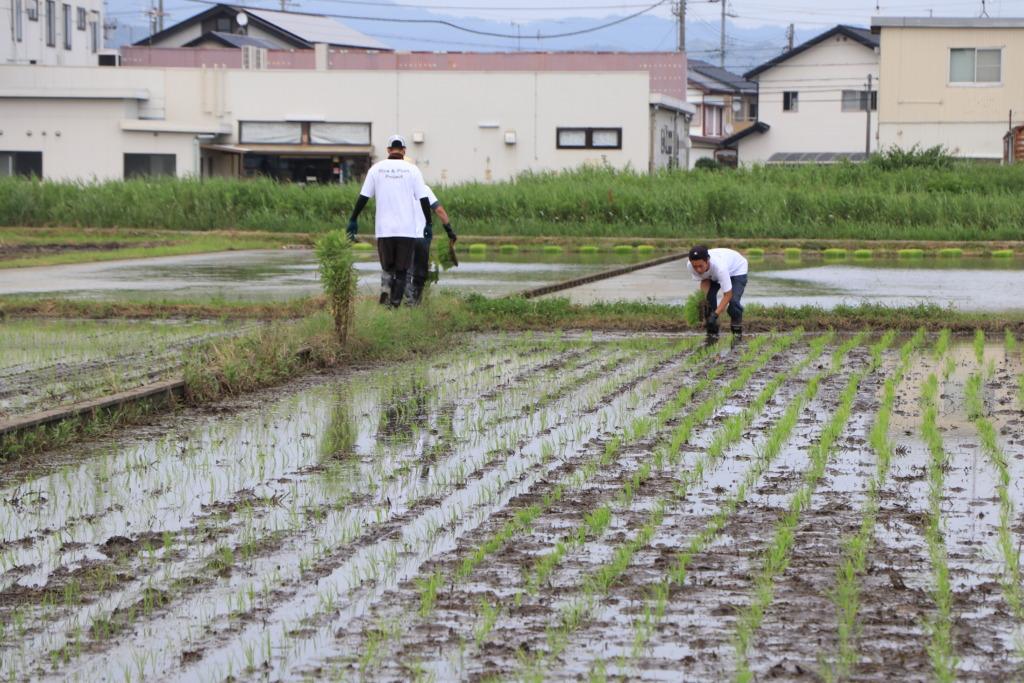 無農薬無肥料玄米
